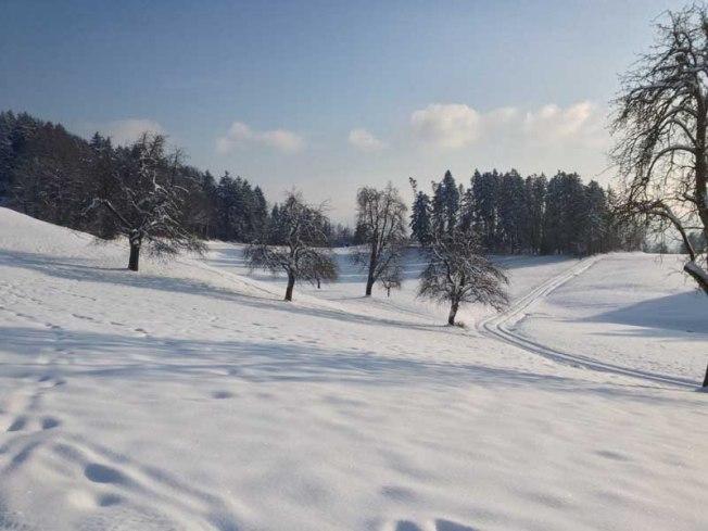 Snowblanket1