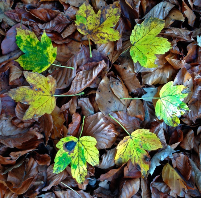 Blätter2