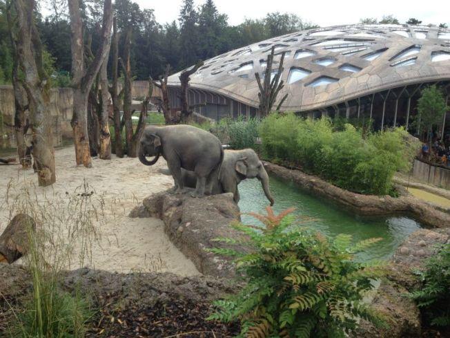 Elefanten1