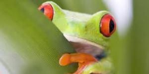 Frosch4