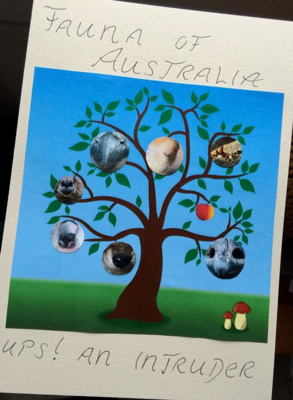 Animals-Australia
