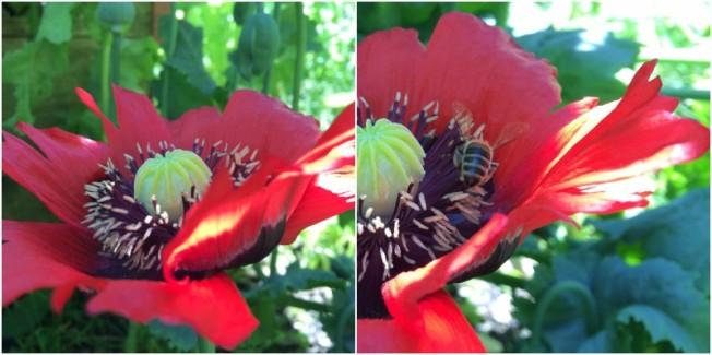 Bienen-Collage-5