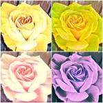 Rosen-4-Collage