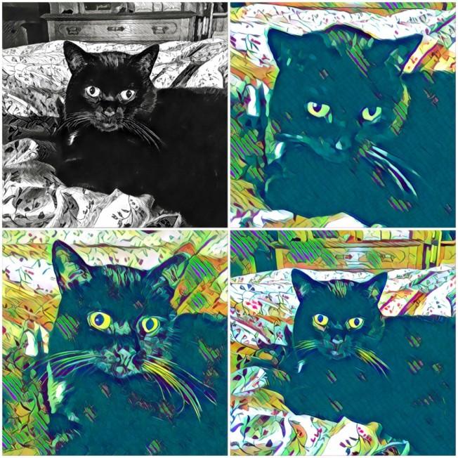 katzen-collage-klein