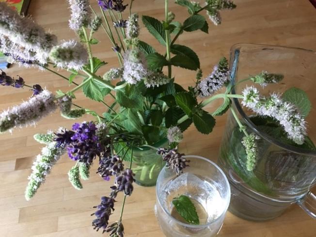 LavendelMinze_2