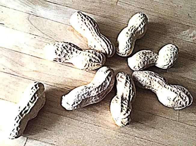 Erdnüsse.jpg