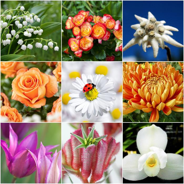 BlumenCollage2